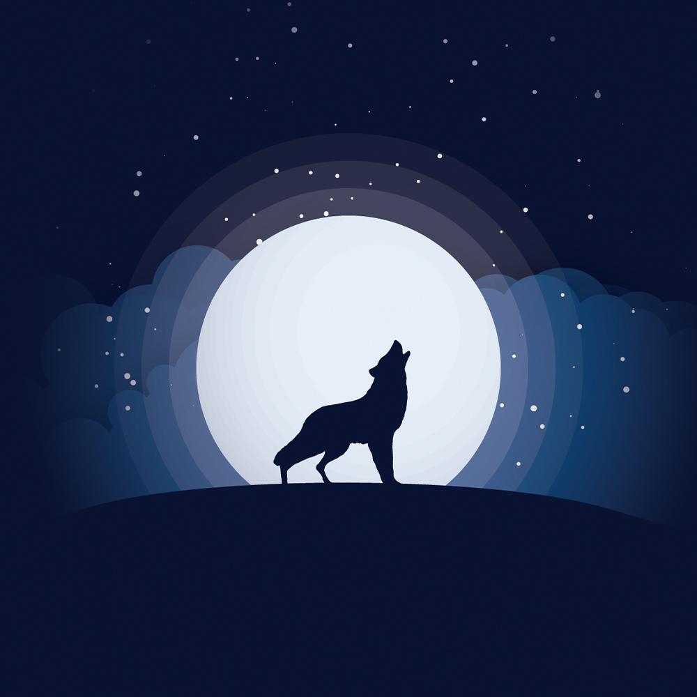 Wolf Graphic Art